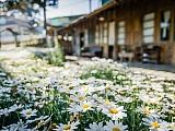 Općina Vinodol raspisala natječaj za najljepšu okućnicu ili vrt