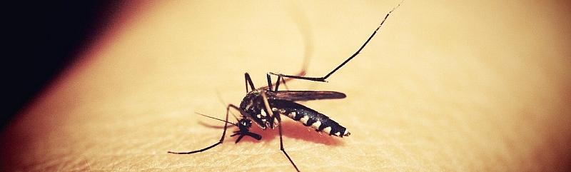 Komarci, štakori, žohari, ose - kako ih se riješiti i kome se javiti