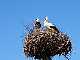 Ako imate rodino gnijezdo na krovu, možete dobiti novce