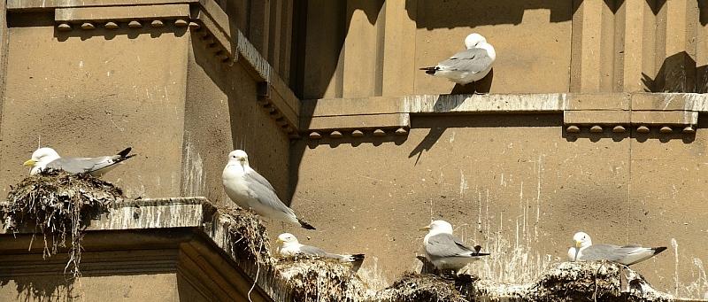 ptičji izmet