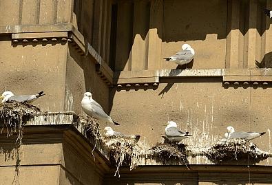 Ptice i ptičji izmet po zgradama - evo kako riješiti problem!