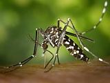Imate problem s komarcima? Ovo su kontakti koje trebate!